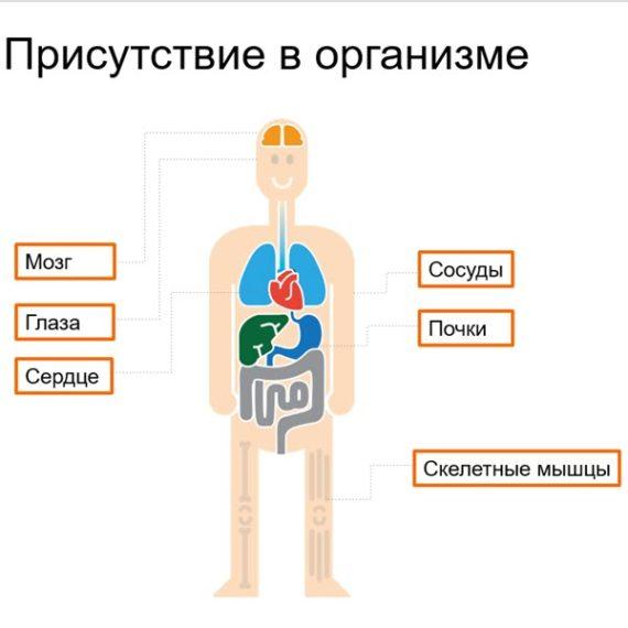 Prisutstvie v organizme Taurin dlya serdca Sibirskoe Zdorove