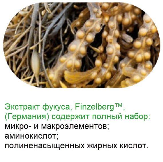 Fucus Bad Vitaminno Mineralnyj Kompleks Natural Vitamins Sibirskoe Zdorove
