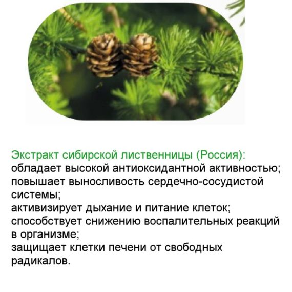 Sibirskay Listvennica Bad Vitaminno Mineralnyj Kompleks Natural Vitamins Sibirskoe Zdorove 1
