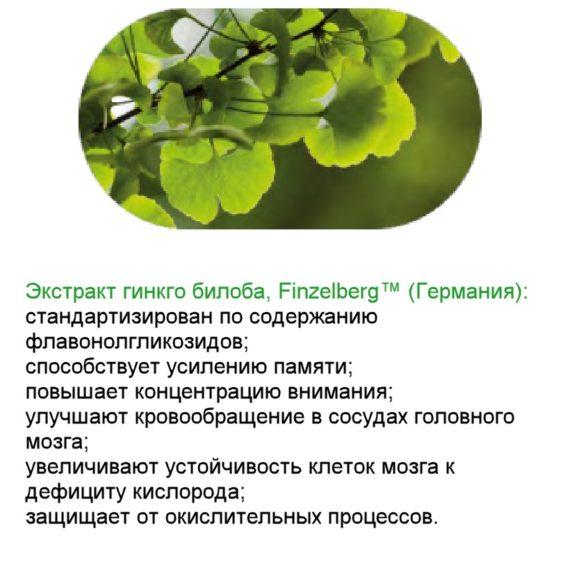 ginkgo biloba Sostav Bad Neurovision dlya zreniya Sibirskoe Zdorove 600