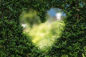 Самые необходимые витамины и микроэлементы для сердца