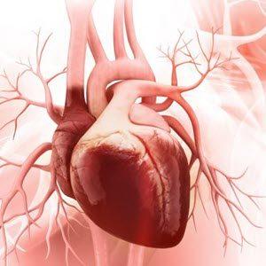 Бады для сердца и сосудов