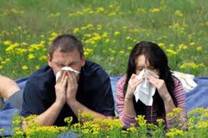 Transfer Faktor Otzyvy pri allergii
