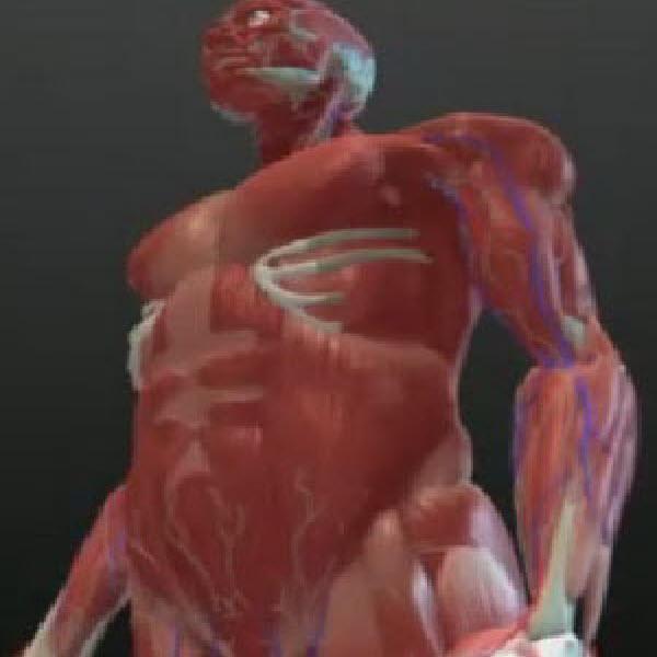 Бады для мышц