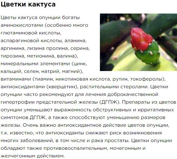 Cvetki Kaktusa Sostav Bad Aktimen dlya muzhskogo zdorovya