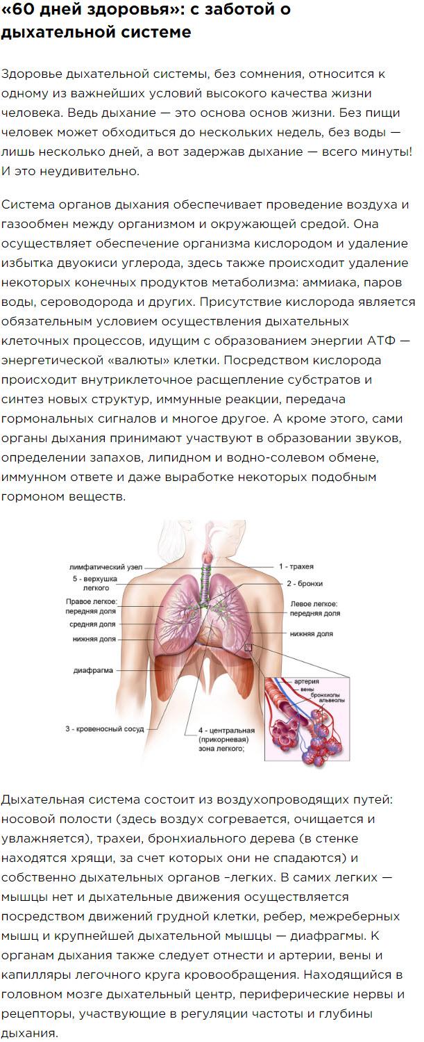 Obzor Chast 1 Peptidnyj kompleks serii Citomaksy dlya legkih bronhov dyhatelnoj sistemy Suprefort lingval