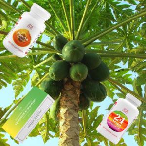Bady s papajej